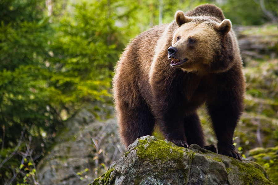 Grizzly Bear Science