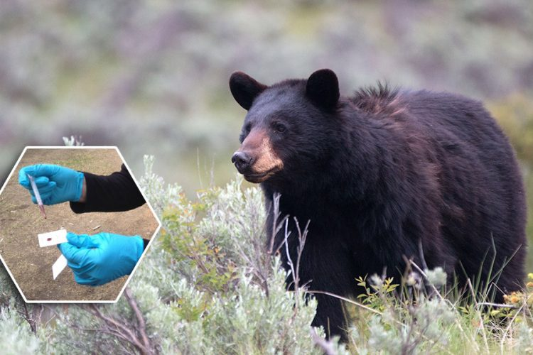 Wildlife DNA Program News Release