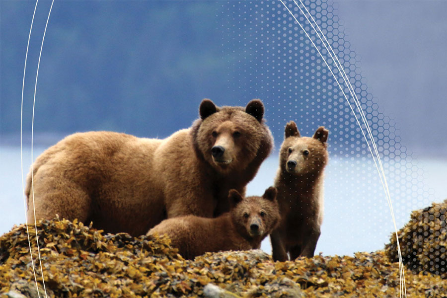The Auditor General's Report says habitat loss is the threat to grizzly bears