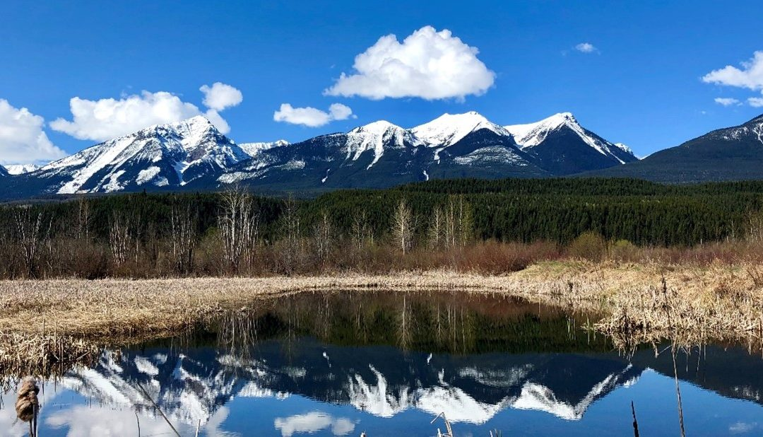 New coalition calls on government to re-establish B.C. as a world leader in Fish, Wildlife and Habitat Management